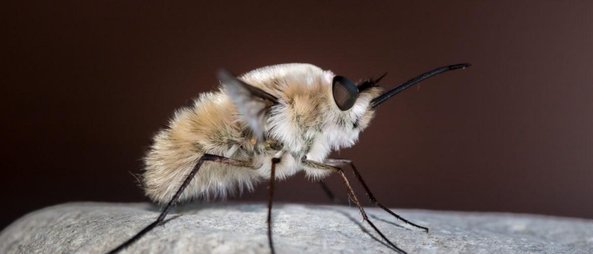 Enlace permanente a:Insectos y otros bichos