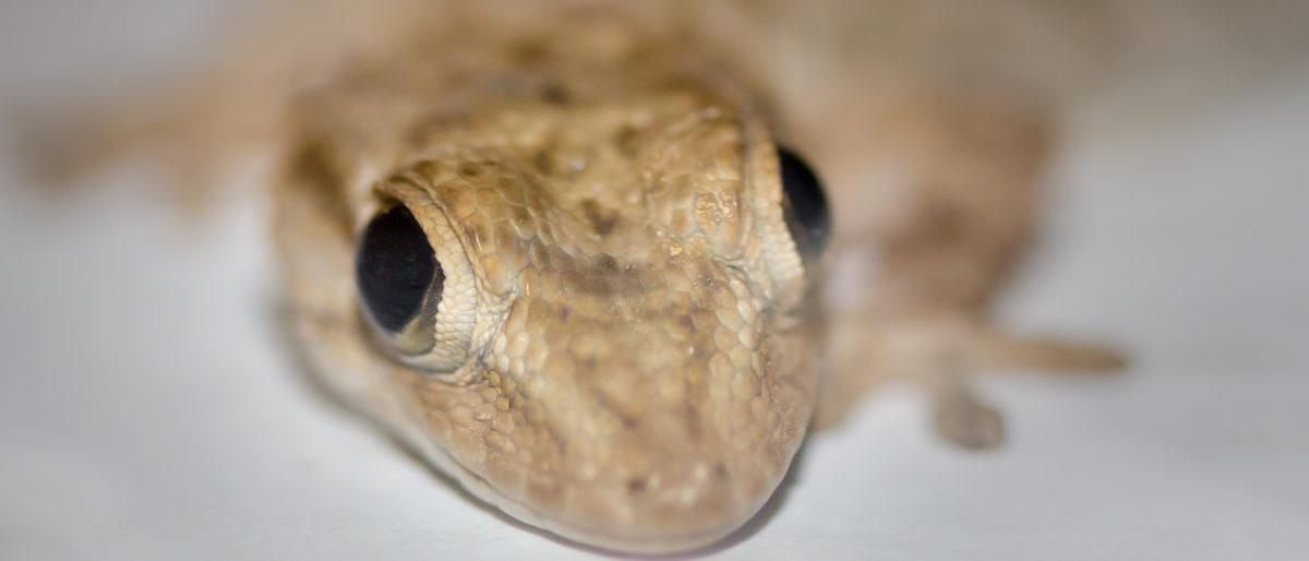 Enlace permanente a:Reptiles